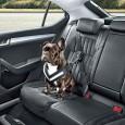 Przez wielu kierowców pies traktowany jest jako pełnoprawny członek rodziny i tak […]